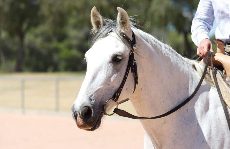 Quelles races de chevaux pour la randonnée ?