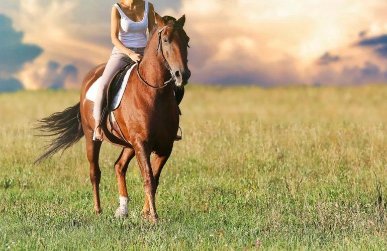Pourquoi partir à cheval en randonnée ?